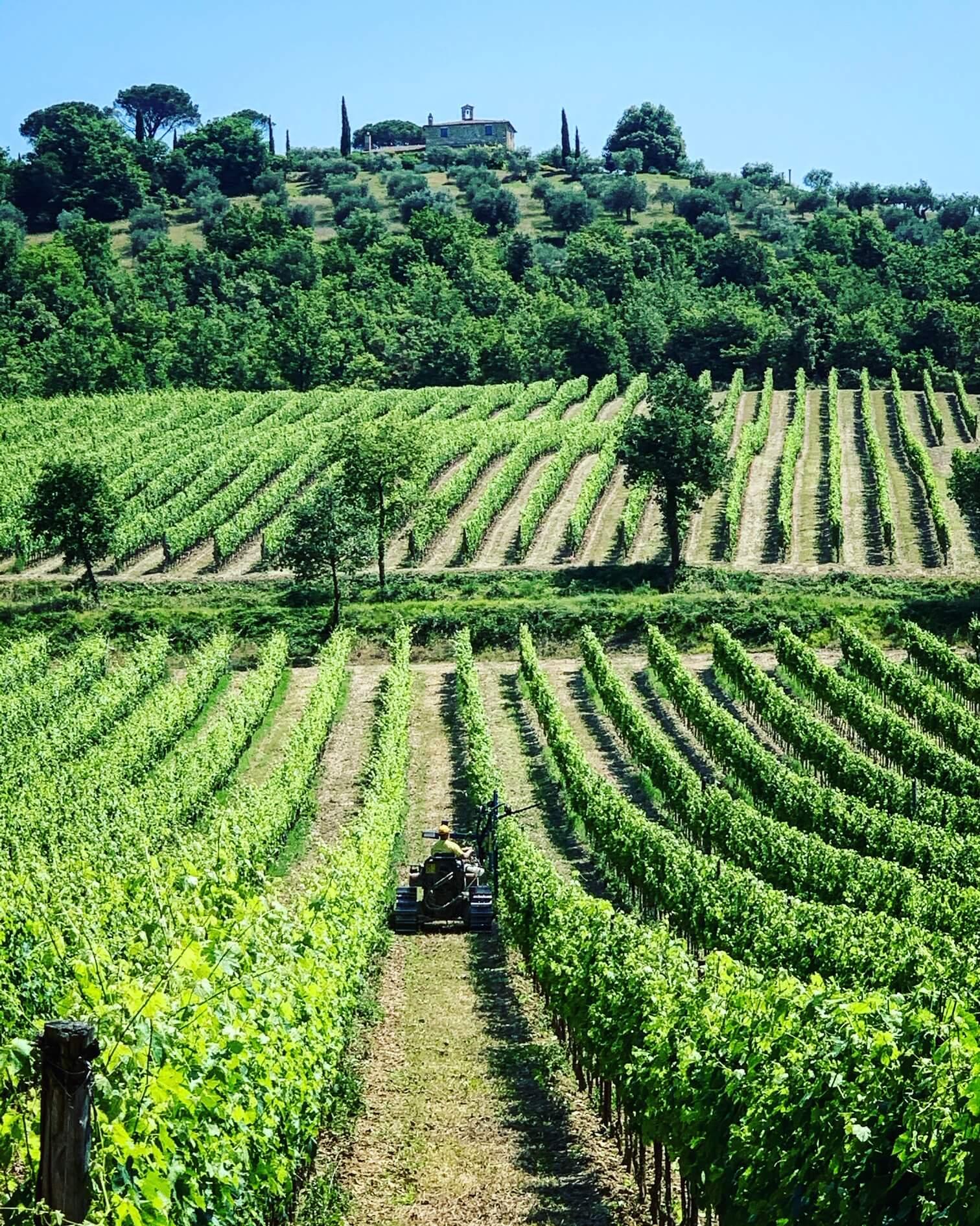 umbria_winery